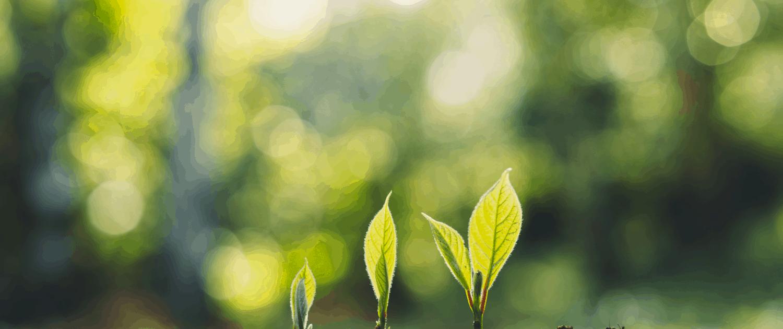 ecological survey